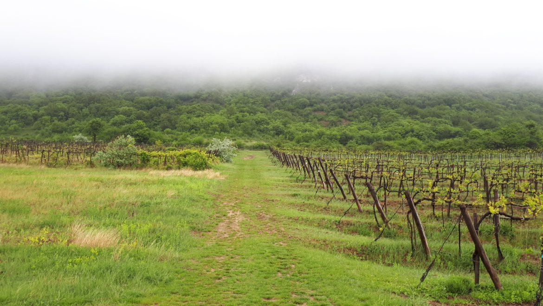 ハンガリーワインの葡萄品種