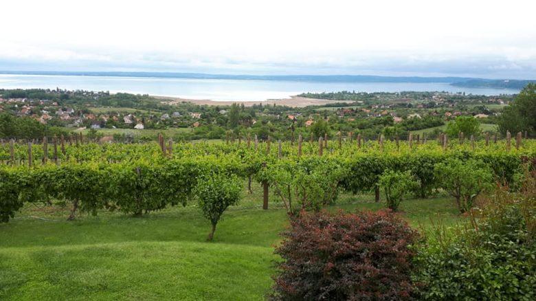 ハンガリーワイン産地と品質分類 原産地呼称